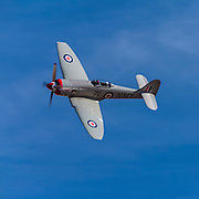 "Hawker Sea Fury ""Sawbones"", flown by Curt Brown of Hudson, Wisconsin. Unlimited class Gold Race, Sunday afternoon at Reno."