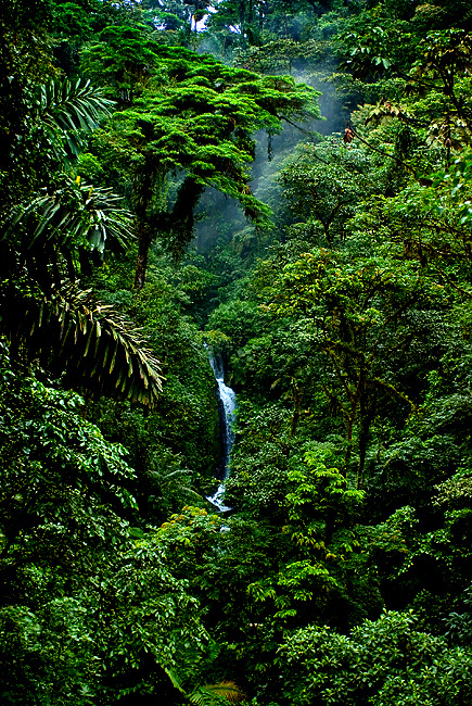 Viewd From The Arenal Hanging Bridges, The Dense Canopy Of The Costa Rican Rainforest And a Distant Waterfall.