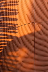 Shadow of leaf on wall due to sunlight, Milan, Italy