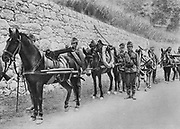 World War I 1914-1918: Austro-Hungarian soldiers with pack horses carrying guns.   First Battle of Isonzo, 23 June-7 July 1915, Italian Front.  Military, Army, Austria, Italy, Transport, Artillery