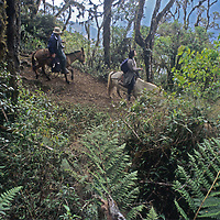 Riders descend through cloud forest above Chuylon, Peru, in the Amazonas District.