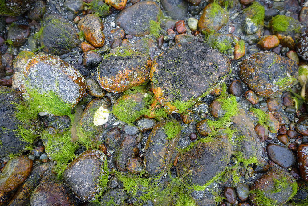 Detail of rocks at Milford Sound, New Zealand