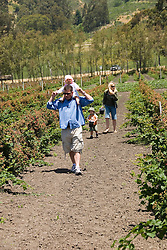 Phipps Ranch for pick your own berries and strawberries,  Pescadero, .San Mateo Coast of California, south of San Francisco.  Photo copyright Lee Foster, 510-549-2202, lee@fostertravel.com, www.fostertravel.com. Photo 467-31061