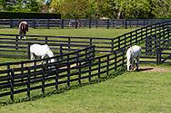 Two Trees Farm, Bridgehampton, NY
