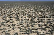 Semi-desert, Kazakhstan