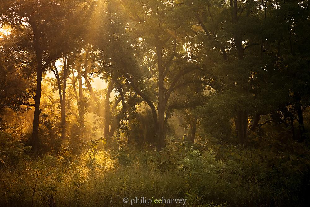Early morning Sunlight, Tadoba National Park, India