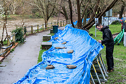 © Licensed to London News Pictures. 16/02/2020. Surrey, UK. A man inspects flood barriers that have been placed near homes along the River Mole in Leatherhead as the Met Office issue an Amber Alert for heavy rain in Surrey as Storm Dennis sweeps across the South East with high winds and more rain for Sunday. Photo credit: Alex Lentati/LNP