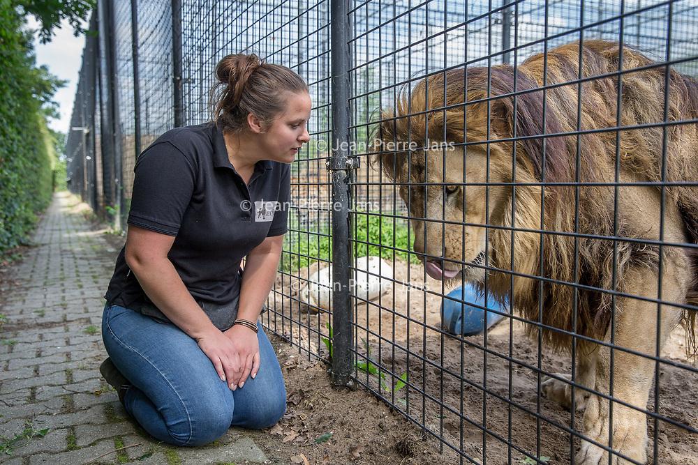 Nederland, Anna Paulowna, 26 juli 2017.<br />Stichting leeuw vangt grote circusdieren op die niet meer mogen optreden en maakt ze klaar om terug te gaan naar Afrika en Azië. Foto van leeuwen met Daphne Pels van de stichting.<br /><br /><br />Foto: Jean-Pierre Jans