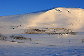 Reindeer herding and sami life