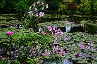 France, Eure (27), Giverny, fondation Claude Monet, le jardin japonais // France, Eure (27), Giverny, Claude Monet foundation, the Japanese garden