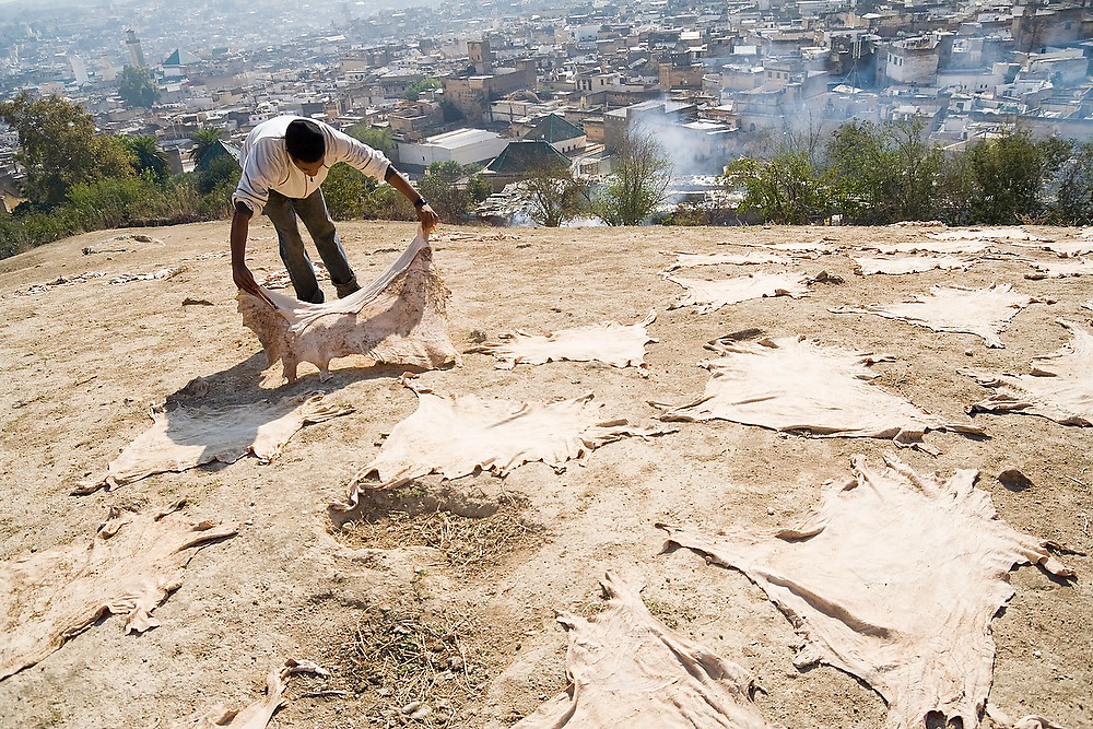 A young man lays out leather sheep skins on the ground to dry on a hill overlooking Fes El-Bali, Morocco.
