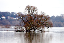 23.01.2011, Elbehochwasser, Lauenburg, GER, Elbehochwasser weitet sich im Umland aus, EXPA Pictures © 2011, PhotoCredit: EXPA/ nph/  Kohring       ****** out of GER / SWE / CRO ******