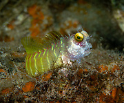 Big eye at Tufi House Reef, Papua New Guinea