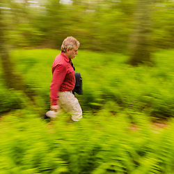 A man walks on a trail through ferns in the forest at the Striar Conservancy, a Wildlands Trust preserve in Halifax, Massachusetts.