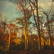 early morning light shining on trees on a november morning - image processed with texture overlays<br /> Redbubble: https://www.redbubble.com/shop/ap/62165051?asc=u