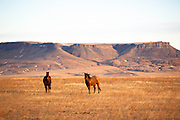 Horses near Square Butte in central Montana.