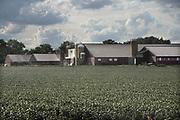 Nederland, Vredepeel, 19-8-2020  Varkensbedrijf in de Peel in Noord-Brabant . Foto: ANP/ Hollandse Hoogte/ Flip Franssen
