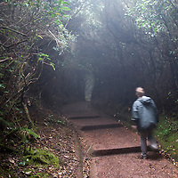 With the constant haze and dense foliage, cloud forests can at times seem daunting, like here at the Poas Volcano in Costa Rica on April 17, 2009.  (Photo/William Byrne Drumm)