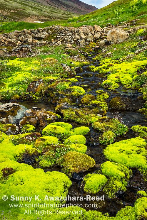 Hidden Creek flows among moss covered rocks in Hidden Valley. Chugach State Park, Southcentral Alaska, Summer.