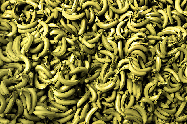 Pile Of Freshly Picked Bananas At A Banana Factory In Costa Rica.