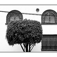 Tree and painted house wall wire iron window bars;<br /> Near Blue House, Frida Kahlo Museum;<br /> Coyoacán area;<br /> Mexico City, Central America;<br /> 24th July 2008<br /> <br /> © Pete Jones<br /> pete@pjproductions.co.uk