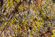 Yellow, orange and white lichen on an orange rock. From Parkins Inscription Camp, we hiked North Bass Trail to Shinumo Creek, to Bass's old camp (featuring old rusting kitchenware). A dip in the rushing waters of Shinumo Creek refreshed us on an unusually hot April day. Parkins Inscription Camp is at Colorado River Mile 108.6 (measured downstream from Lees Ferry). Day 7 of 16 days rafting 226 miles down the Colorado River in Grand Canyon National Park, Arizona, USA.