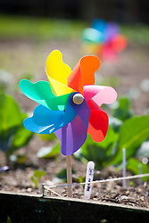 Colourful windmill used as bird scarer to protect vegetable crops