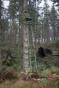 A Northumbrian hunting seat is located at the top of ladders, leaning against a pine tree, on 25th September 2017, in Rothbury, Northumberland, England.