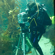 Acclaimed photographer Wayne Martin Belger takes the plunge into Birch Aquarium at Scripps's 70,000-gallon kelp forest tank on July 12&13, 2008, to take photographs with an underwater pinhole camera for his forthcoming book about North American Aquariums.