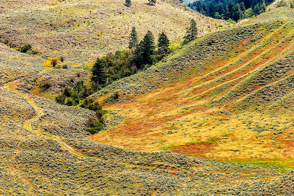 Springs Palate: A cattle trail bisects the scene of multi-coloured grass and shade bush in this normally arid hillside, near Osoyoos British Columbia Canada.