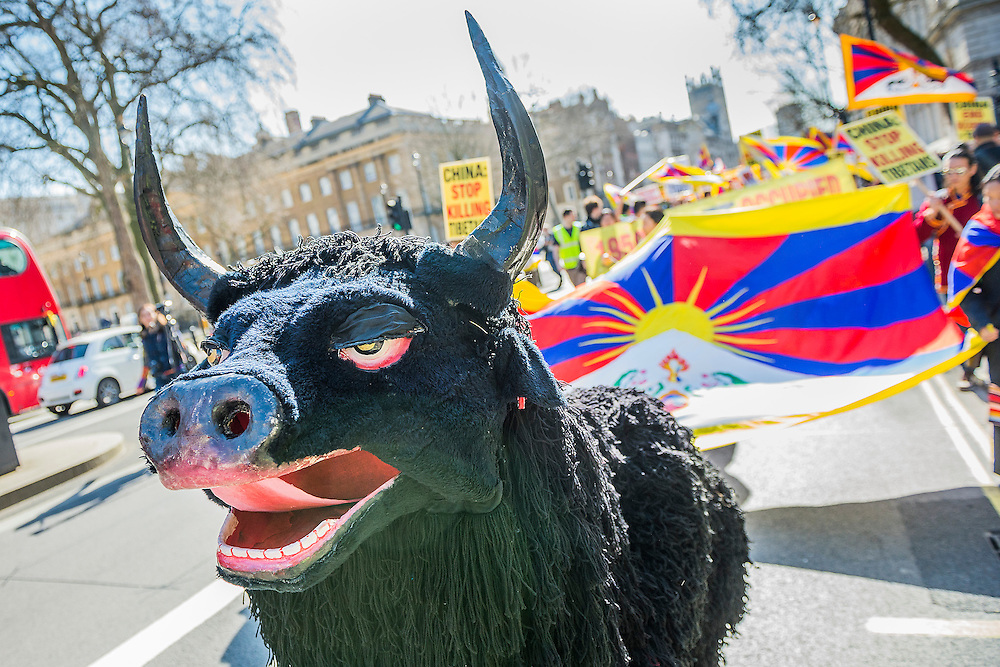 Organisations calling for a free Tibet hand in a petition to Number 10 Downing Street and then march on the Chinese embassy - led by a Tibetan monk and a 'pantomime' yak.  At the same time supporters of a non-Russian Ukraine try to make the UK government aware of the consequences of another super-power land grab. Whitehall, London, UK 15 March 2014. Guy Bell, 07771 786236, guy@gbphotos.com