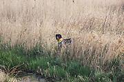 Modern Hunting Series - In Zusammenarbeit mit Jagdjournalistin Anna Lena Kaufmann<br /> <br /> Jägerin Anna Lena Kaufmann und Deutsch Kurzhaar Adsche beim Derby