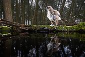 Photographing Wildlife - DSLR Camera trap