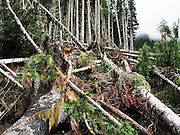 An avalanche gully filed with knocked down trees in Glacier Peak Wilderness, Washington.