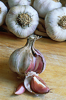 Tete d ail // Garlic head