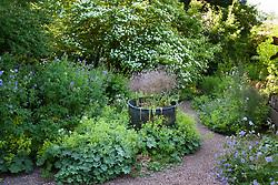 Allium schubertii in a copper container with Alchemilla mollis, Geranium pratense and Cornus 'Norman Hadden' at Glebe Cottage