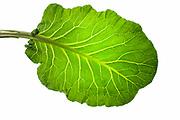 a collard green leaf from my Modern Fine Art series of kitchen fine art photography
