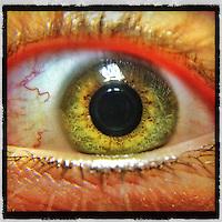 Sasha's eye.Friday Sept 14, 2012..Photo by Brian Baer