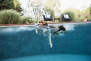 papillon swimming in a pool Taken from in the pool at water level