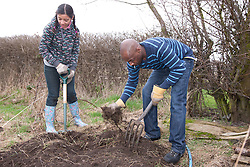 Man and girl digging out weeds on an allotment.
