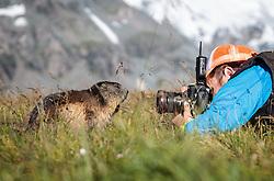 THEMENBILD - ein Fotograf setzt Murmeltiere auf der Grossglockner Hochalpenstrasse in Szene, Heiligenblut, Oesterreich, aufgenommen am 31. Juli 2015 // a photographer sets marmots on the Grossglockner High Alpine Road in scene, Heiligenblut, Austria on 2015/07/31. EXPA Pictures © 2015, PhotoCredit: EXPA/ JFK