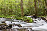 66745-04507 Straight Fork Creek in spring, Great Smoky Mountains National Park, NC