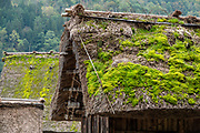 """Mossy roof. In Ogimachi, the peaceful Gassho-zukuri Minka-en Outdoor Museum displays farmhouses relocated from surrounding villages. Ogimachi is the largest village and main attraction of the Shirakawa-go region, in Ono District, Gifu Prefecture, Japan. Declared a UNESCO World Heritage Site in 1995, Ogimachi village hosts several dozen well preserved gassho-zukuri farmhouses, some more than 250 years old. Gassho-zukuri means """"constructed like hands in prayer"""", as the farmhouses' steep thatched roofs resemble the hands of Buddhist monks pressed together in prayer. Their thick roofs, made without nails, are designed withstand harsh, snowy winters and to protect a large attic space that was formerly used to cultivate silkworms. Many of the farmhouses are now restaurants, museums or minshuku lodging."""