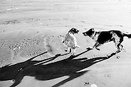 My dogs Lilly and Lobo running and playing at sunset on Pacific Beach, Washington