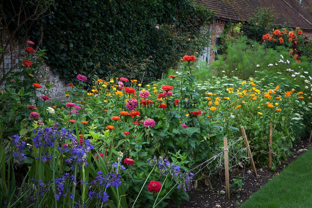 Cut flower garden with Agapanthus, Zinnias, Calendula, Ammi, Cosmos and Dahlias