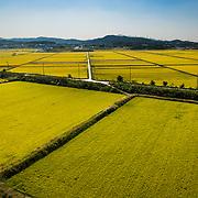 Rice Fields near Asan, South Korea