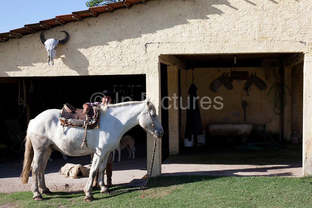 Brazilian male Gaucho cowboy saddling up his horse outside the stable. Working Gaucho Fazenda in Rio Grande do Sul, Brazil.