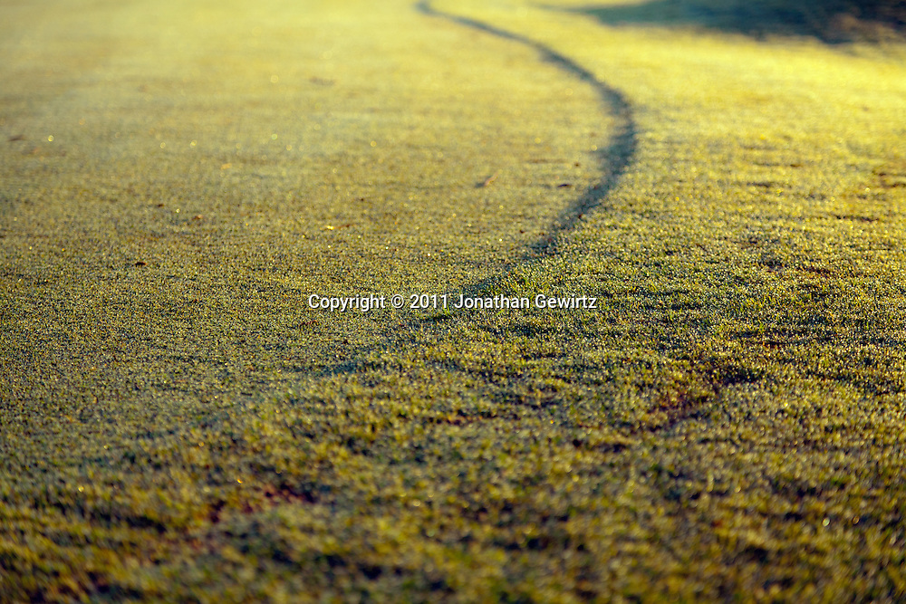 The lush green grass surface of a golf course putting green covered in morning dew. WATERMARKS WILL NOT APPEAR ON PRINTS OR LICENSED IMAGES.