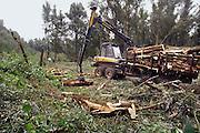 Nederland, Nijmegen, 18-9-2006..Een medewerker van een houtkapbedrijf is bezig met onderhoud aan de millingerwaard. Het wordt uitgedund zodat het water van de waal bij hoge waterstand meer ruimte heeft. ..Foto: Flip Franssen/Hollandse Hoogte