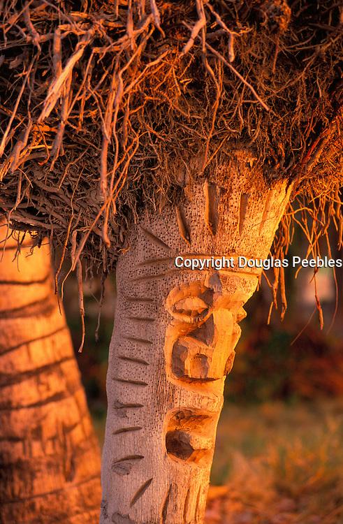 Coconut Palm Carved into Tiki's, Island of Hawaii, Hawaii, USA<br />